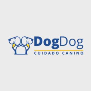 Foto de portada Dog Dog Cuidado Canino