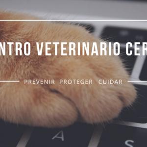 Foto de portada Centro Veterinario Ceres